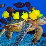 Okyanus Belgeseli izle hayvan belgeseli